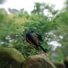 境内の孔雀