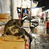Cat in a market