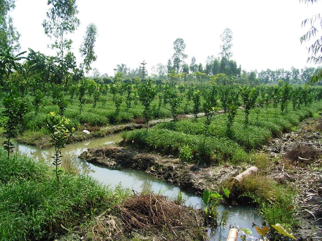水路が走るミカン畑