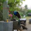 孔雀とくまのプーさん