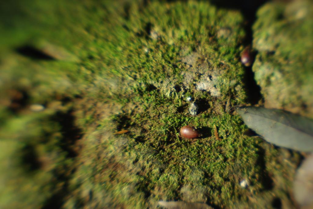 石段に落ちていたドングリ