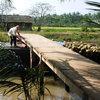 ココ椰子を積むボートが橋をくぐる