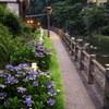 Walking path along OJIKAGAWA river