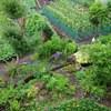 Backyard cultivation of RYOKAN
