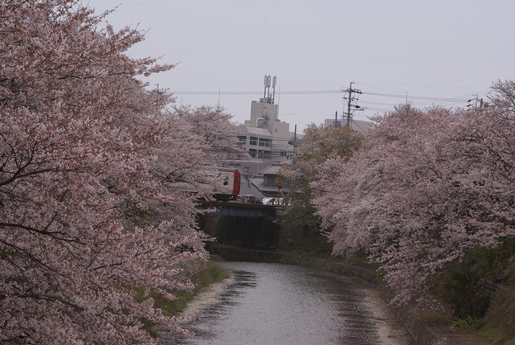 桜と名鉄特急