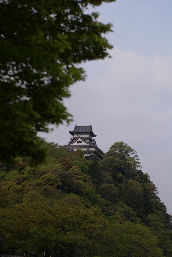 新緑の犬山城