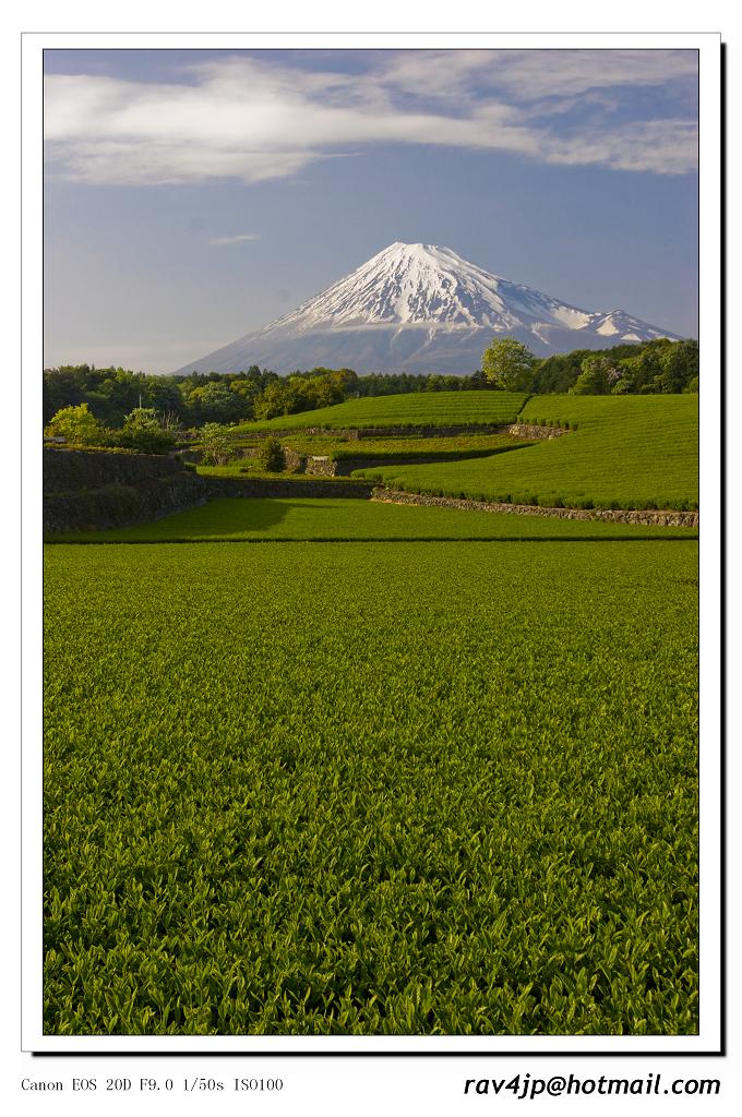 静岡新茶と富士山