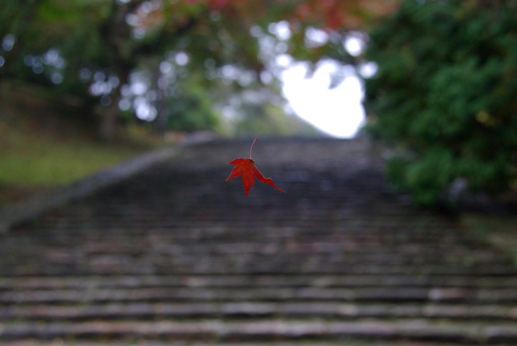 落ちる紅葉