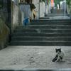 憩いの階段