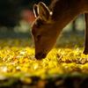 仔鹿のキッス