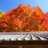 箸蔵寺の紅葉