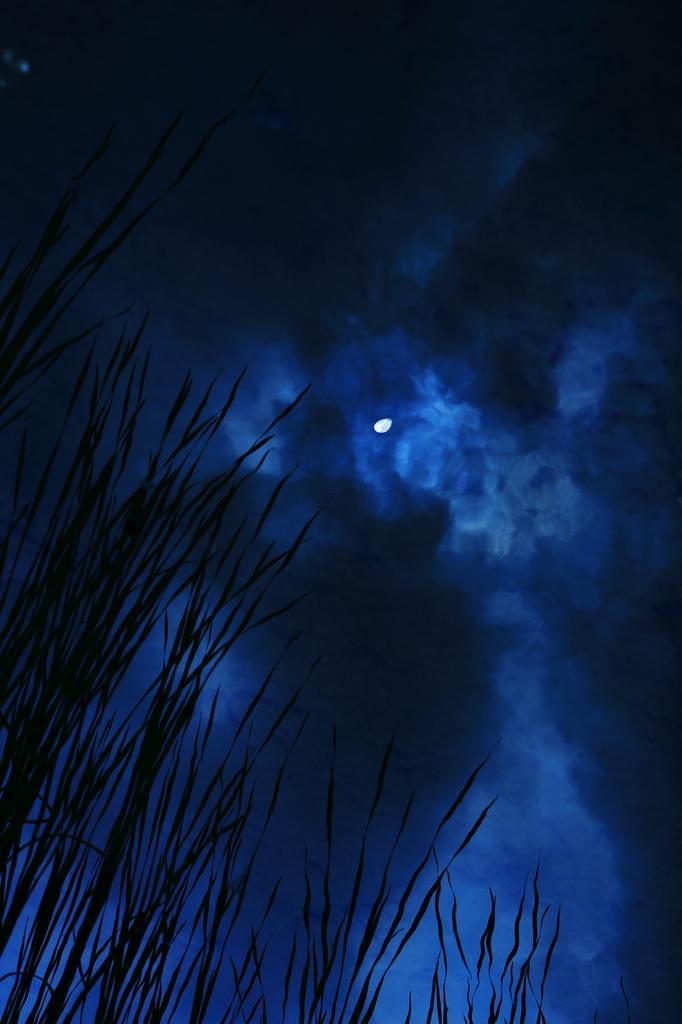 水面に浮かぶ月