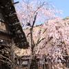 白川郷の春