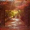 秋寺の参道