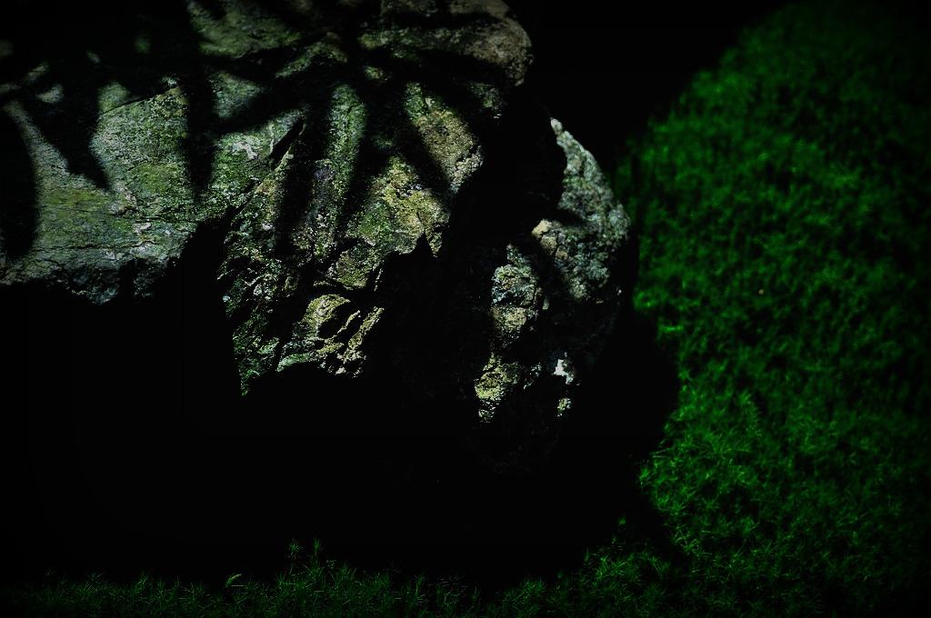 岩の上の影
