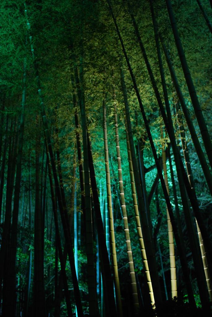 竹のライトアップ①