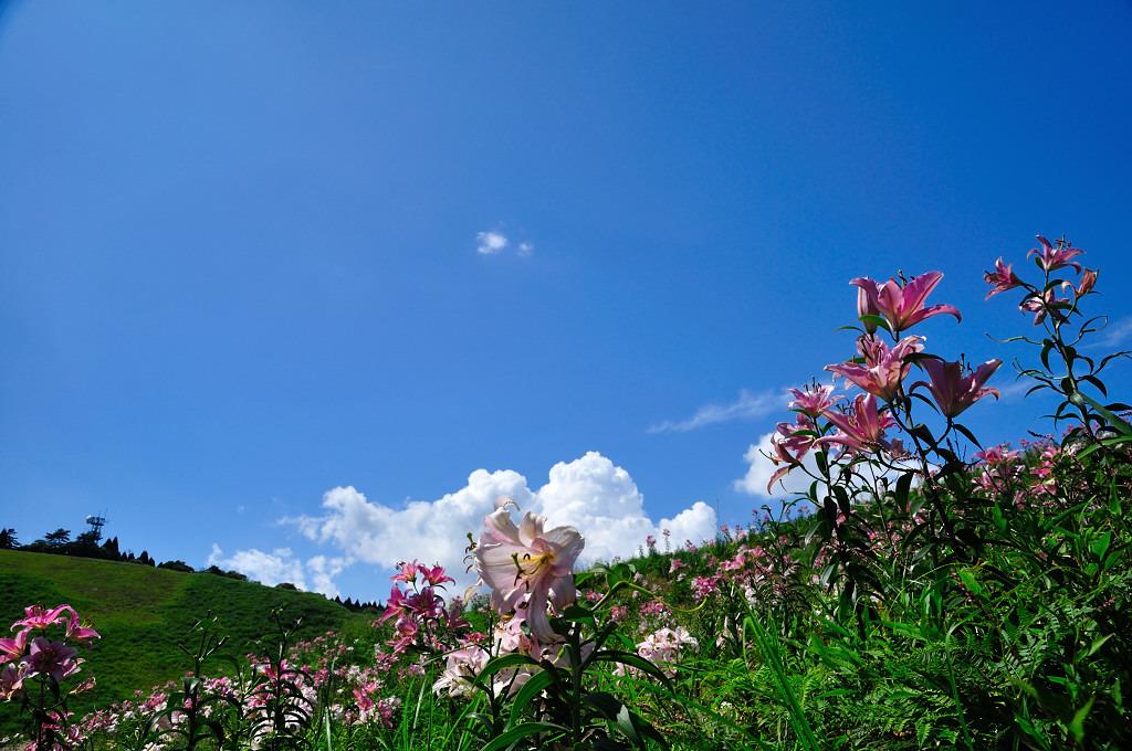 ユリと青空と雲