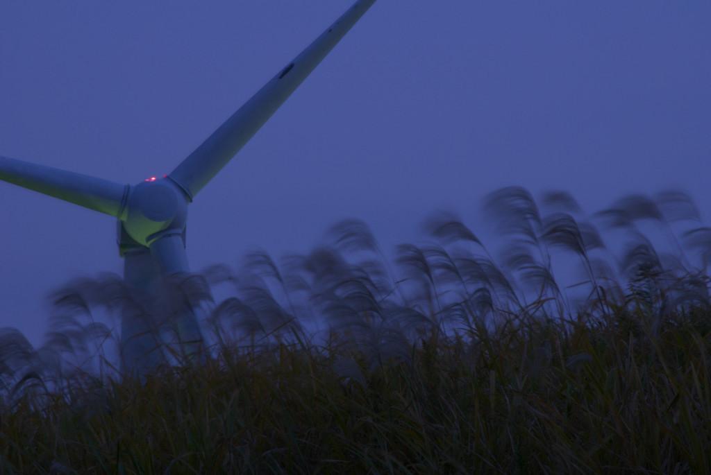 すすきと風車