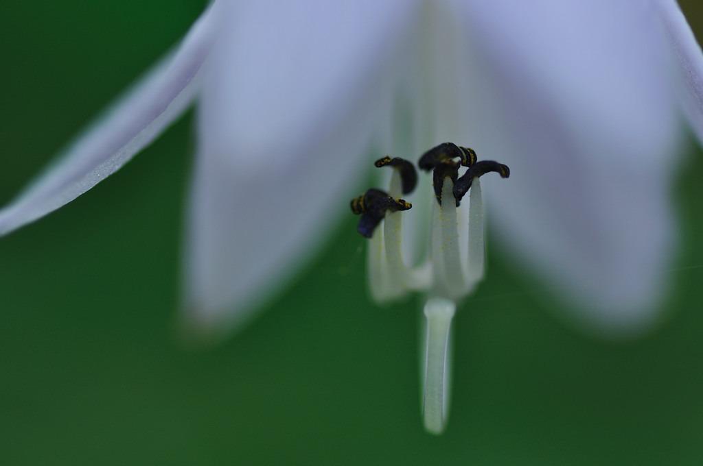 下向きの花