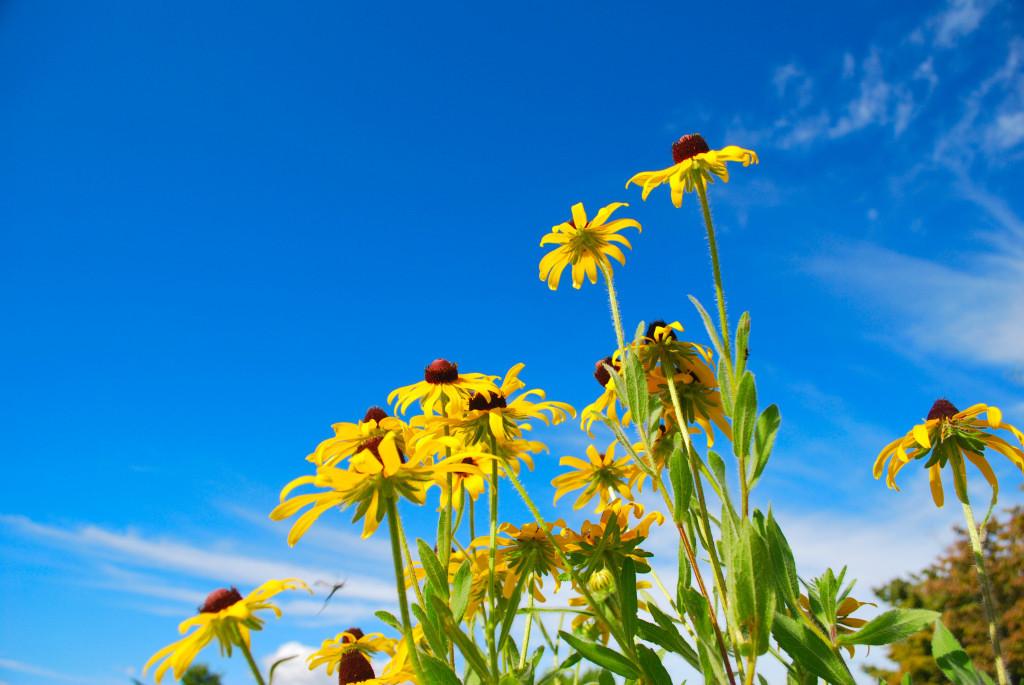 黄色い花と空