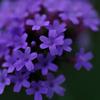 小さな紫の・・・。