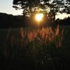 輝ける雑草たち