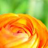 オレンジの繊細