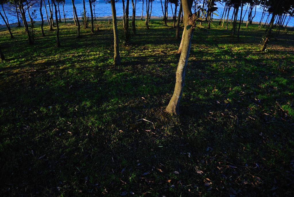 木の奥に。