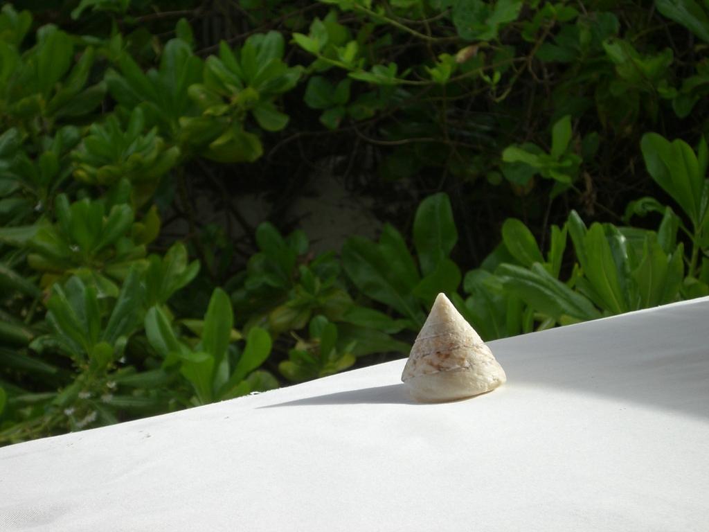浜で拾った貝殻