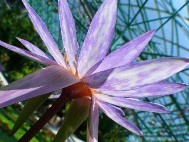 花ビラSky