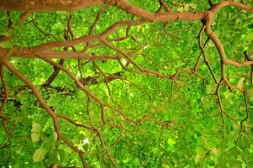 何の木(^_^;)ですか?