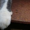 猫の右手 enosima