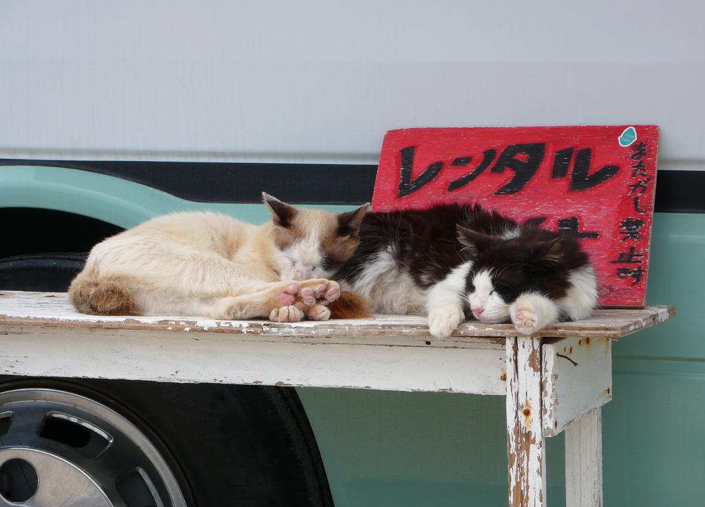 レンタル猫 またがし禁止です。