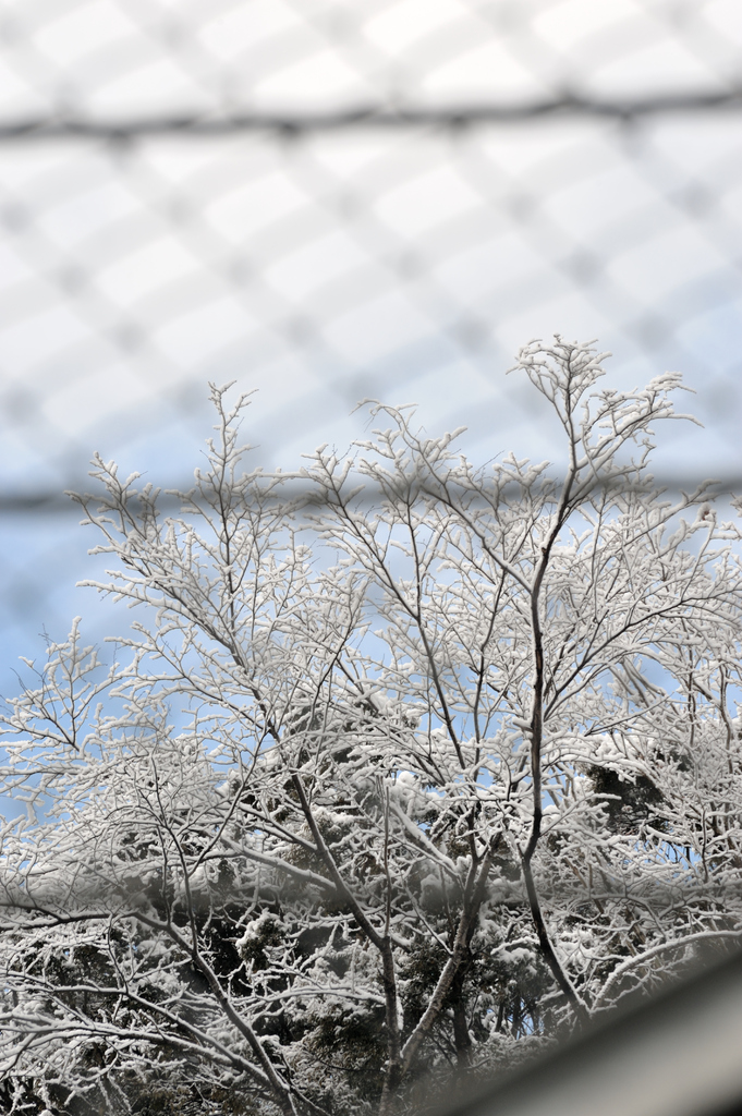 Snow in the other side of wire net