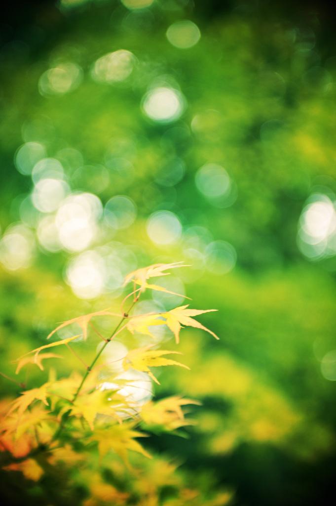 Leaf colored Green