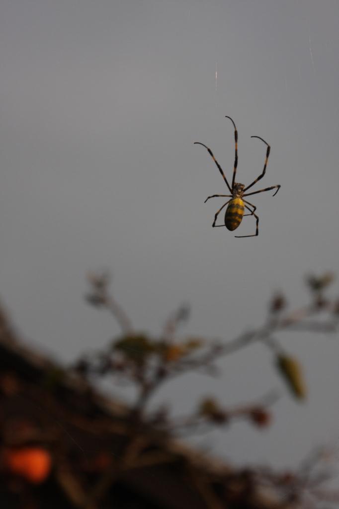 秋の蜘蛛(2)