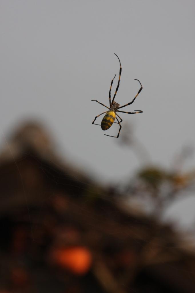秋の蜘蛛(1)