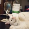 安いワインで構いません。