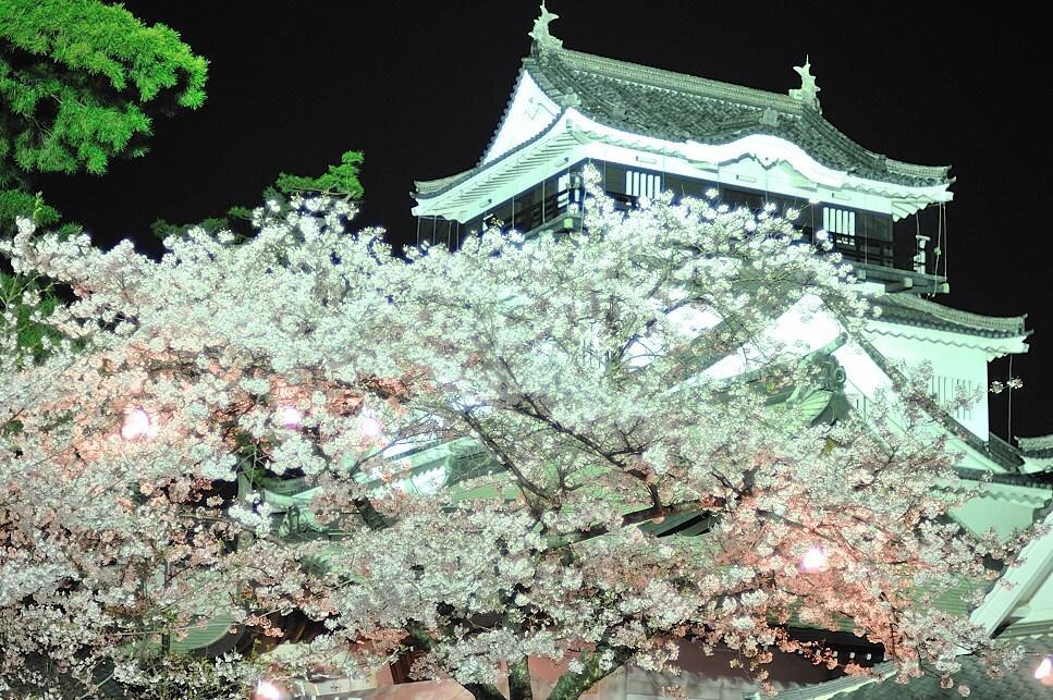"""岡崎城の""""夜桜"""""""