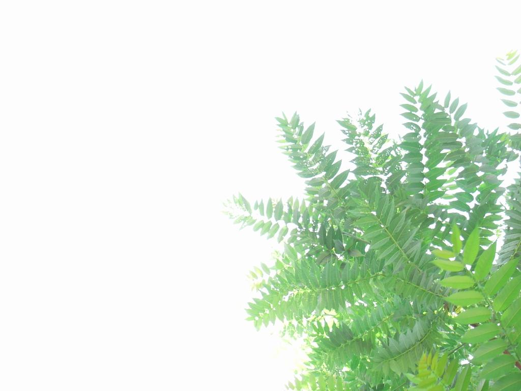 そこらへんの木