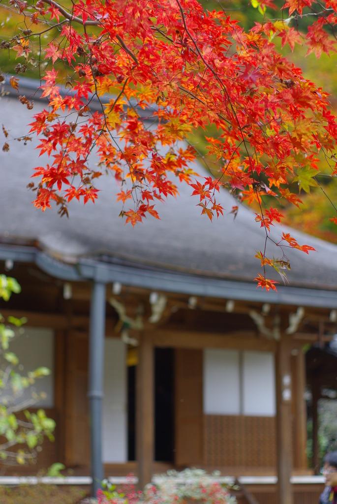 京都 大原 三千院 寂光寺