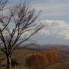 十勝岳連峰を眺める桜の木♪