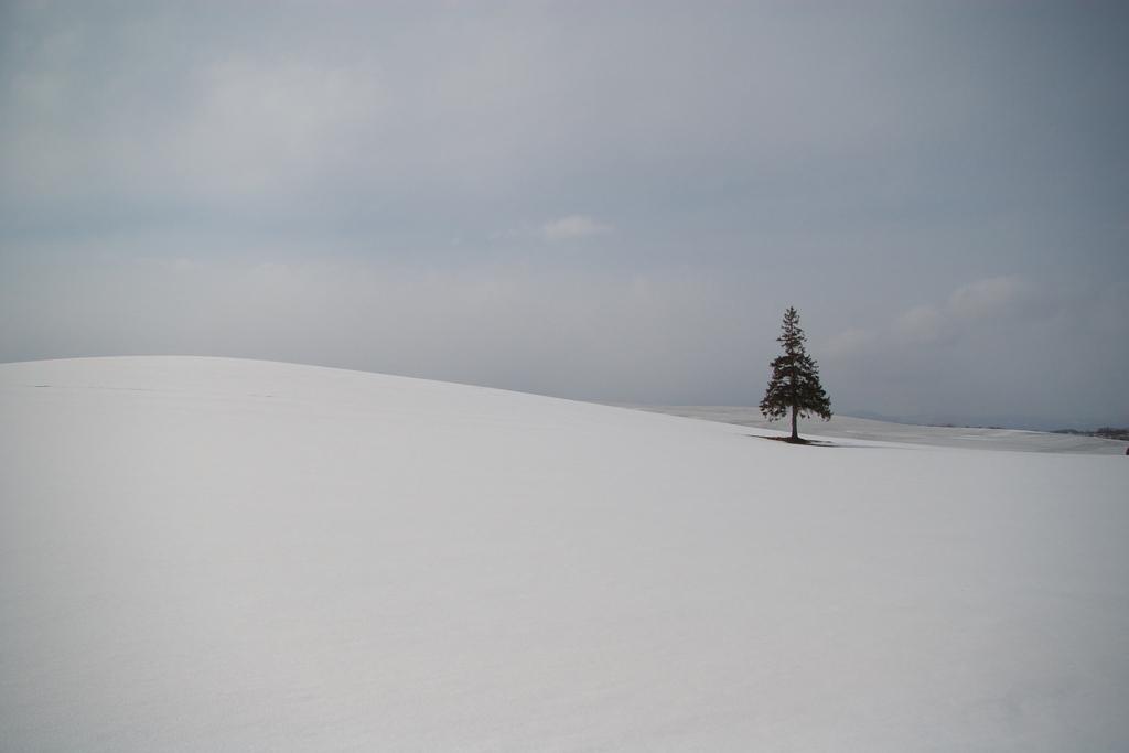 クリスマスツリーの木♪