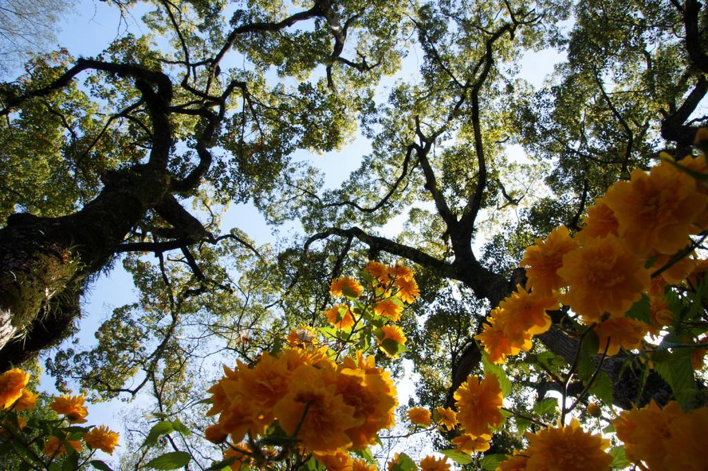 Sunlight delight a flower.