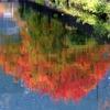 燃ゆる河紅葉