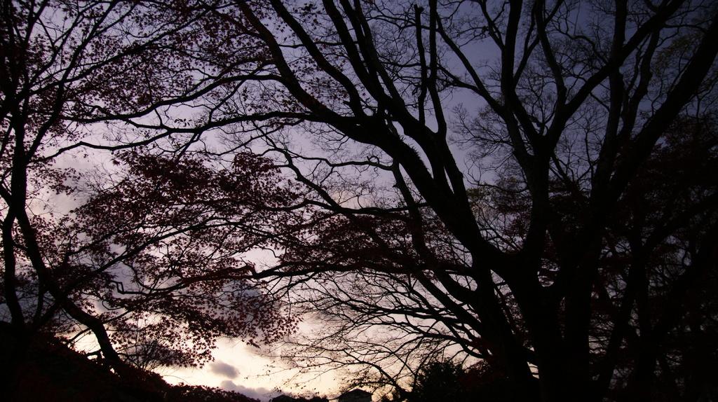 紅葉の夕暮れ