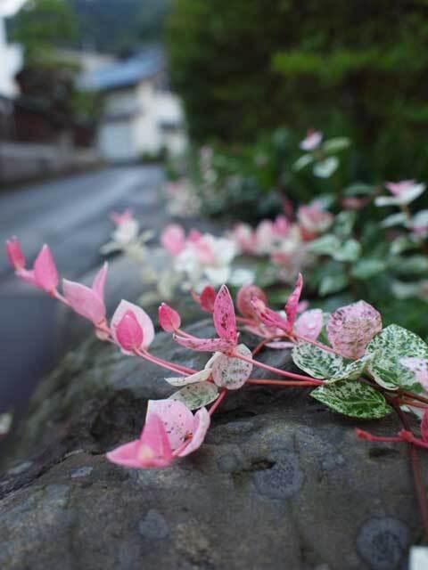 花?葉っぱ?