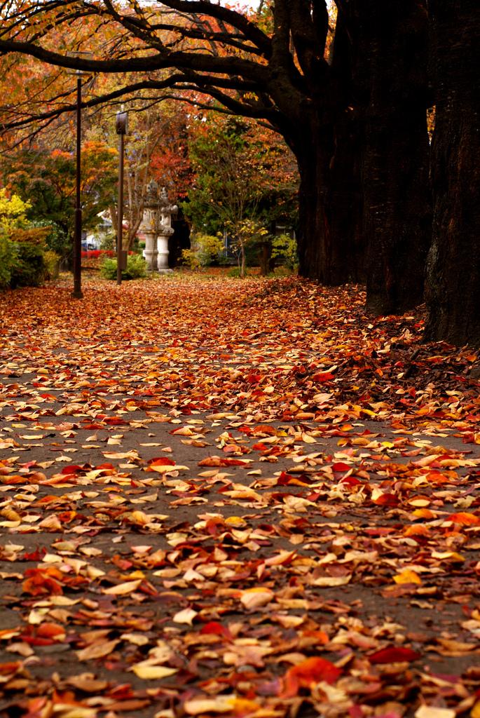 落葉のとき