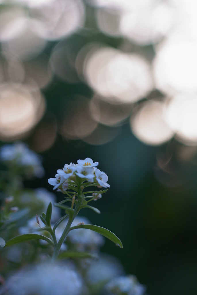 Light in morning_2