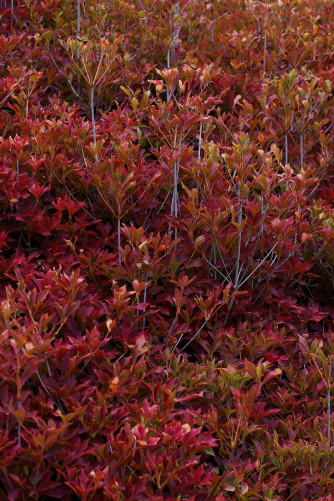 Scenery of autumn (2)